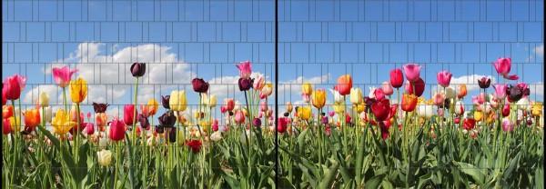 Tulpen - Panorama XL bedruckte Sichtschutzstreifen für Doppelstabmattenzaun
