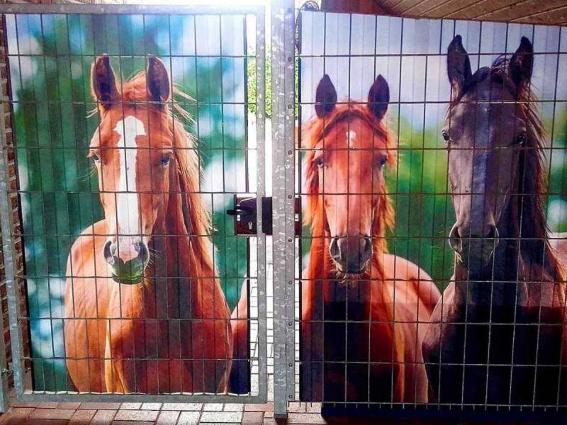 Zaun Sichtschutz Pferde