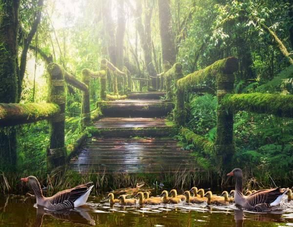 Zaunposter & Gartenposter Park mit Enten
