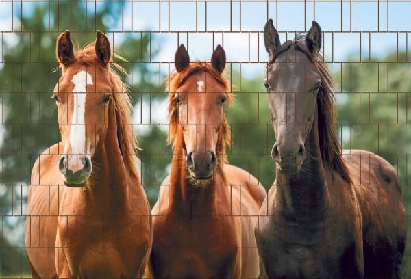 Pferde - Bedruckter Sichtschutz Streifen Rolle Doppelstab Zaun
