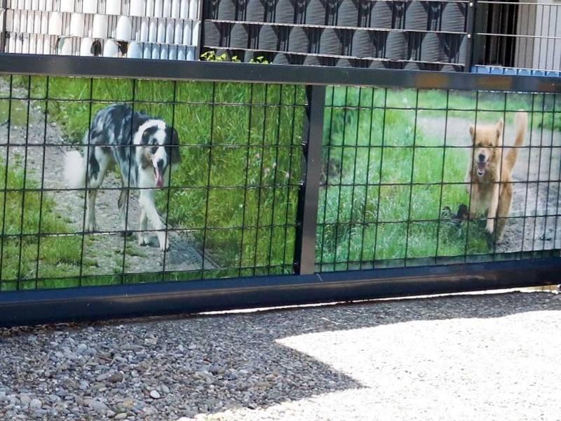 Zaun Sichtschutz Hunde