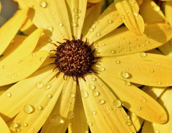 Zaunposter & Gartenposter Blütenblätter